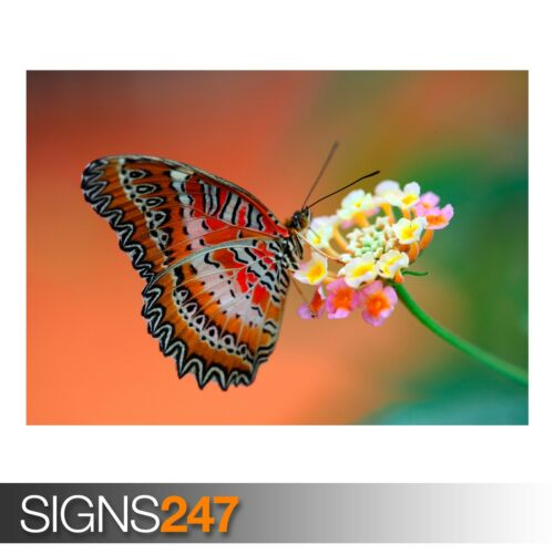 3422 Photo Poster Print Art * All Sizes Animal Poster BUTTERFLY ON FLOWER