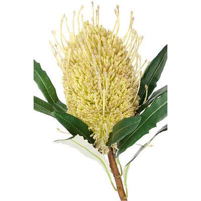 NEW Australian House & Garden Banksia Cone, 61cm - Dark Green