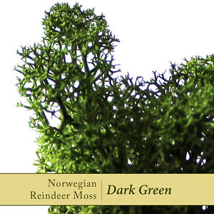 500g-Dried-Reindeer-Moss-Dark-Green-Perfect-for-plant-terrariums-amp-Crafts