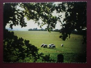POSTCARD ANIMALS SHEEP GRAZING ON THE BERKSHIRE DOWNS - Tadley, United Kingdom - Full Refund less postage if not 100% satified Most purchases from business sellers are protected by the Consumer Contract Regulations 2013 which give you the right to cancel the purchase within 14 days after the day you receive th - Tadley, United Kingdom