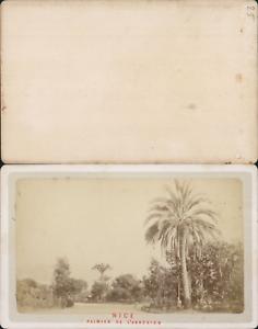 France Nice Palmier De L 039 Annexion Vintage