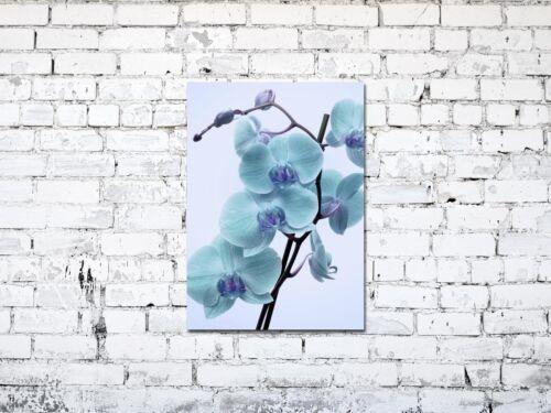 Premium Glasbild AG5705000846 DEKO 50 x 70 cm ORCHIDEE FLORAL BLUE