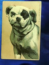 Vintage Tucks postcard Old English Bulldog Bully dog w patch over eye Sweet!