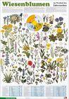 Wiesenblumen im Wechsel der Jahreszeiten (1998, Merchandise)