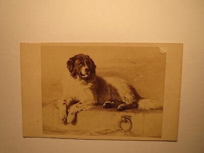 liegender hund - kunstbild ca. 1860/70/80er jahre / cdv | ebay