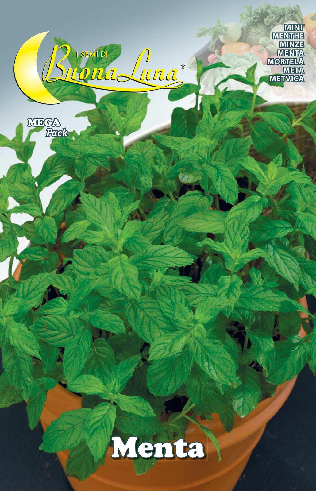 Semi menta orto pianta piantine  40 pezzi cod. 76484 giardinaggio buona luna