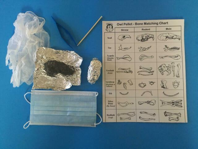 Barn Owl Pellet Dissection Individual Kit 2 Count (2+ Inch ...