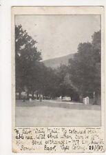 South Africa, Oak Avenue, Somerset Easr 1907 Postcard, B242