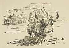 ERICH FRAASS / FRAAß - Yack (Zoo Dresden) - Lithografie 1928/1929