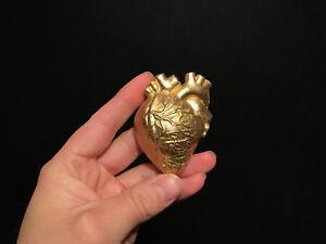 Coeur Humain Photo cabinet de curiosités / décoration / replique coeur humain doré   ebay