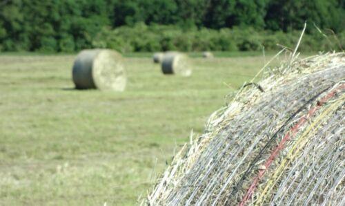 Ballennetz Rundballennetz Netz für Heu 0,08€//1m Stroh PolyStar® 1,25 x 2000m