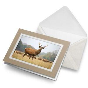 Greetings-Card-Biege-Adult-Red-Deer-Stag-Animal-21110
