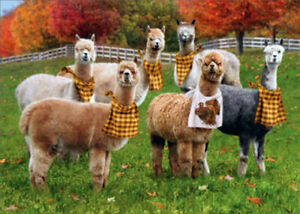 Details about Avanti Alpacas With Napkins Funny Humorous Thanksgiving Card
