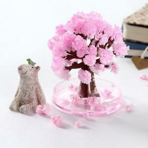 Magischer-Baum-Magic-Tree-Samen-Japanische-Kischblueten-Kristall-Bae-N6L3