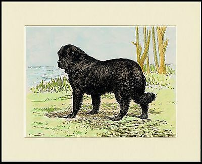 NEWFOUNDLAND AND WATER LOVELY DOG PRINT MOUNTED READY TO FRAME