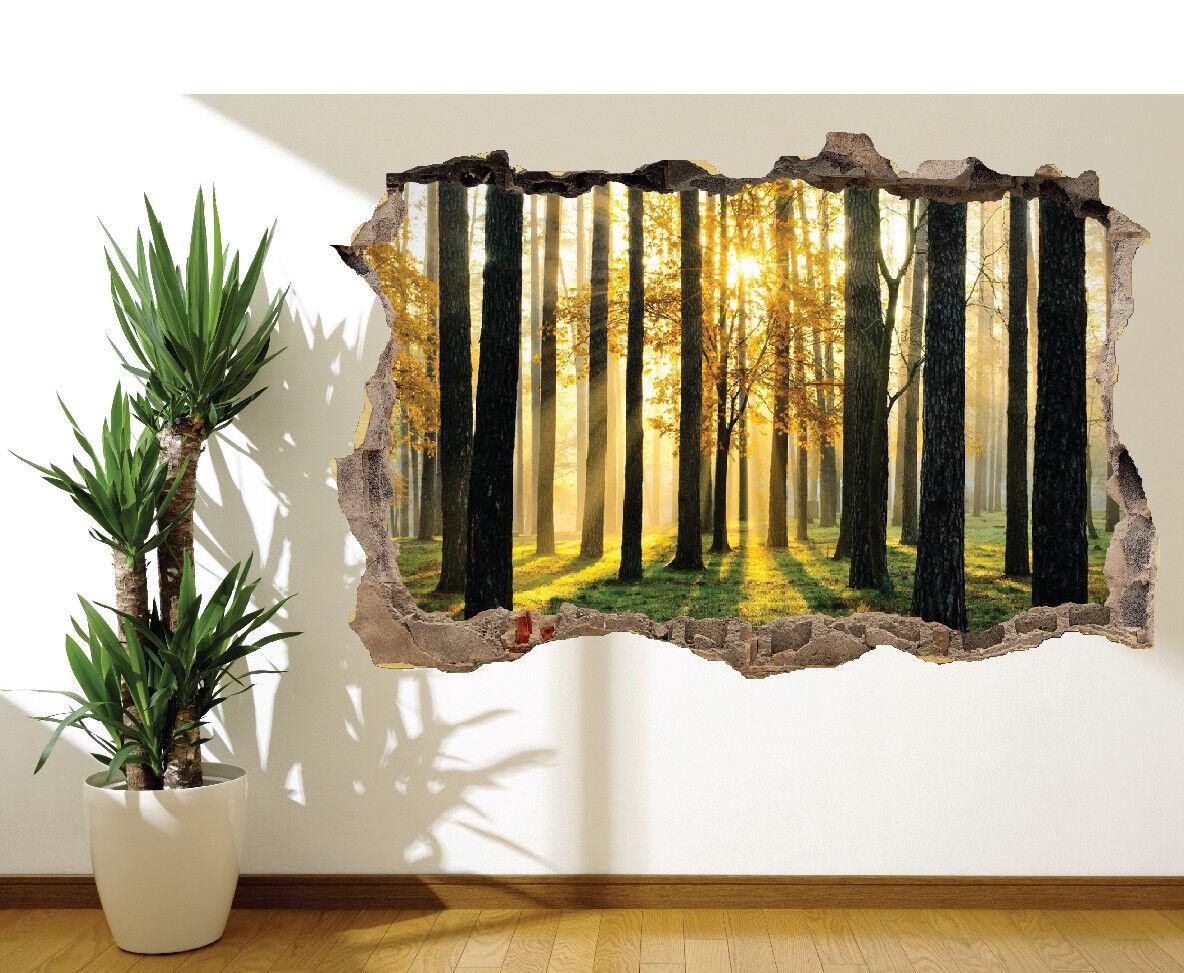Autocollant Mural Forêt Lever Du Soleil Soleil Soleil Arbres Photo Décoration (16170744) | Porter-résistance  281d5c