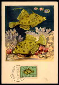 Inquiet Mocambique Mk 1955 Poissons Poisson Fish Pesce Poisson Maximum Carte Mc Cm H1799-afficher Le Titre D'origine
