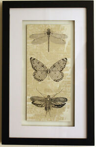 Stylish-BLACK-amp-WHITE-INSECT-PICTURE-Print-Framed-Dragonfly-Butterfly-Moth-NEW