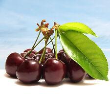 Premium Black Cherry 30 ML Liquid Juice - USA Made - 0 Nic E - from ECV