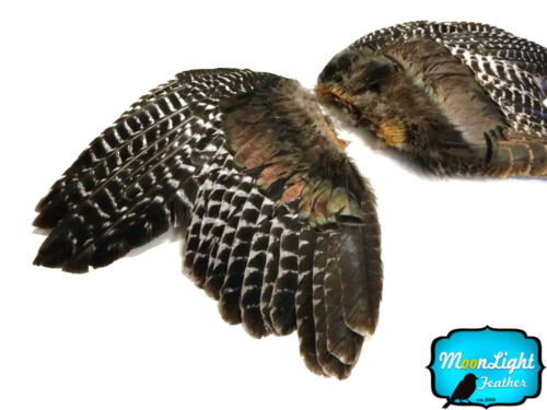 NATURAL BARRED Wild Turkey Complete Large Wing Feathers 1 Pair