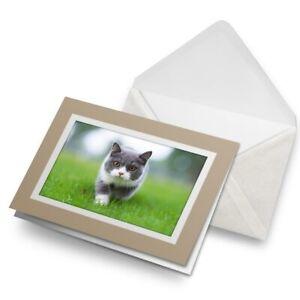 Greetings-Card-Biege-British-Shorthair-Kitten-Cat-21291