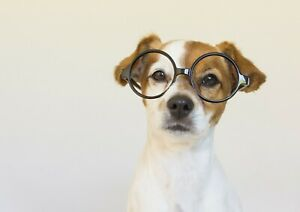 A3-Cute-Jack-Russell-Puppy-Poster-Size-A3-Dog-Funny-Pet-Poster-Gift-14649