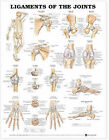 Ligaments of the Joints Anatomical Chart by Anatomical Chart Co. (Fold-out book or chart, 2001)