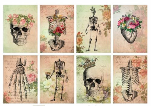 Crafts Embellishment Floral Skeletons Anatomy Glossy Finish Card Topper