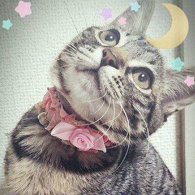 beauty-cat
