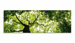 Leinwand-Bild-Bilder-Wald-Natur-Baum-Blaetter-Licht-Krone-Aste-Zweige-gruen-Baeume