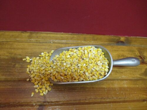 20lbs #1 YELLOW SHELLED CORN Farm Fresh Feed for Squirrels Deer /& Other Wildlife