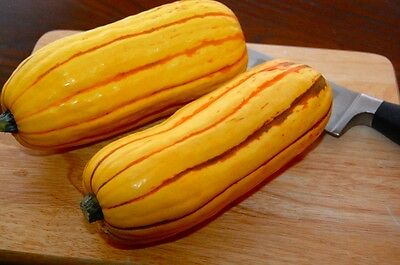 VEGETABLE  DELICATA SQUASH  30 FINEST SEEDS
