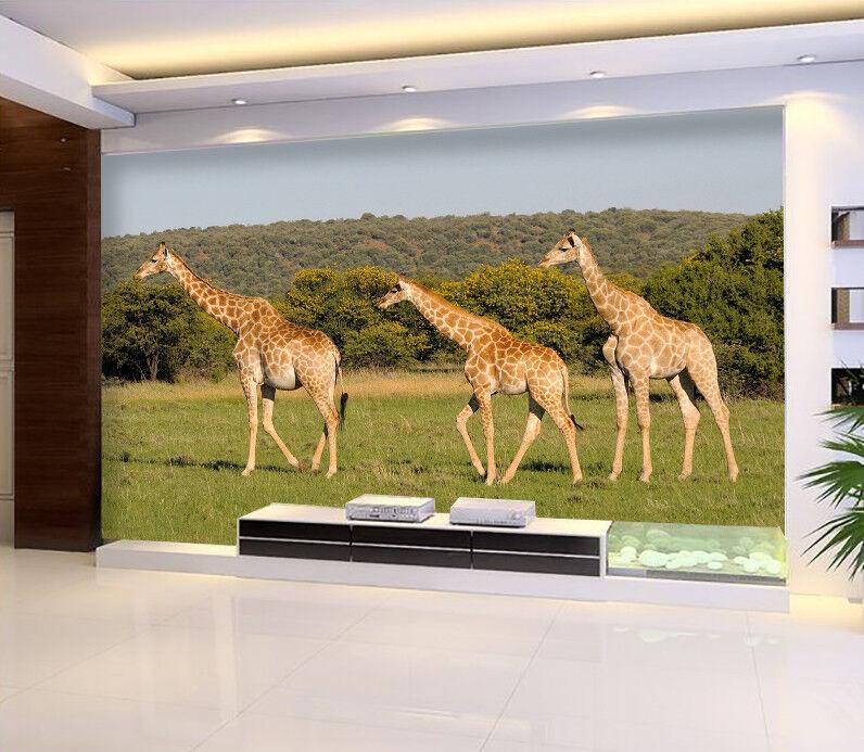 3D Three Giraffes 742 Wall Paper Murals Wall Print Wall Wallpaper Mural AU Kyra