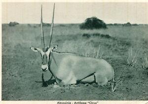 Carte-ETHIOPIE-ABYSSINIE-Antilope-Oryx