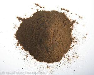 Lions-mane-Hericium-erinaceus-mushroom-extract-powder-30-1-50g-1kg