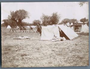 Tunisie-Camp-de-El-Adriana-Les-oliviers-et-les-tentes-abri-Vintage-citrate-pr