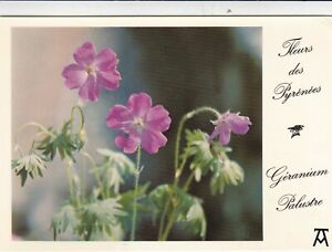 Flowers-of-the-Pyrenees-Postcard-used-VGC