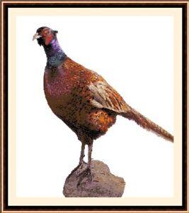 Pheasant-Cross-Stitch-Kit