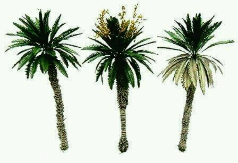 Desert palm trees set. 3 trees 1 set 26 cm.heifgt 1 35 scale. TPD-024