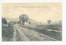 Pearl Street LIVINGSTON MANOR NY Rare Antique Catskills PC Liberty 1910