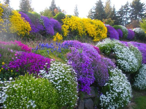 0.5g Alpines Perennial ROCKERY GARDEN MIXED FLOWER SEEDS SEEDS
