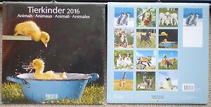 Tierkinder-2016-Wandkalender-mit-Ferienterminen-Tiere-Babys-ovp-Korsch-V