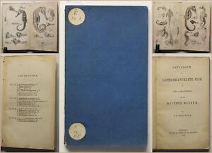 Kaup-Seepferdchen-Catalogue-of-the-Lophobranchiate-Fish-1856-Seefische-Fische-sf