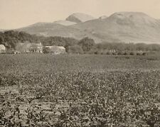 1899 PRINT COLONIAL SOUTH AFRICA THE PAARL ROCK & VINEYARDS WINE CAPE TOWN
