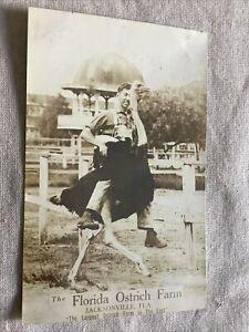 C1910-RPPC-Real-Photo-Vintage-Postcard-Jacksonville-Florida-FL-Man-Rides-Ostrich