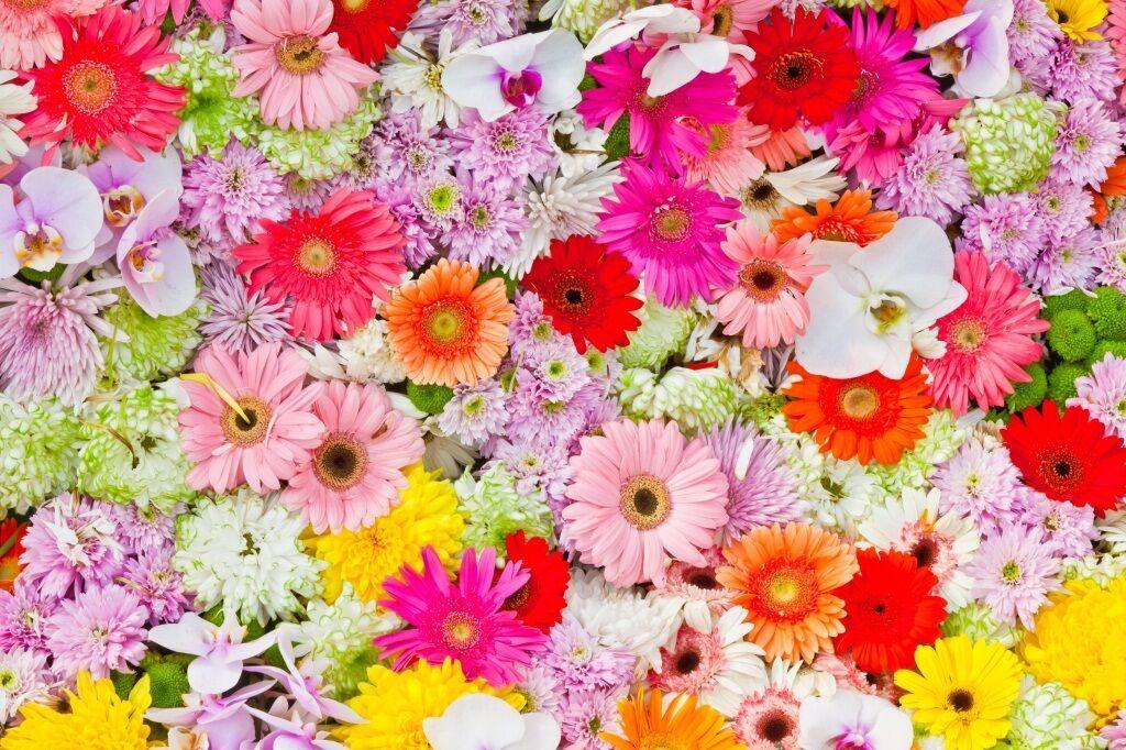 3D Flowers bloom Farbeful Wall Stickers Vinyl Murals Wall Print Deco AJSTORE UK