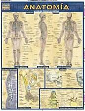 Barcharts - ANATOMIA  study guide (QUICK STUDY) EN ESPANOL Anatomy