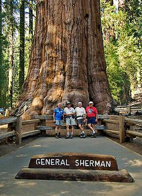 SEQUOIADENDRON GIGANTEUM - GIANT SEQUOIA, 100 HIGH QUALITY SEEDS
