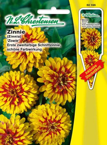 Zinnie /'Zowie/' zweifarbig  rot//gelb Schnittblume /'Zinnia elegans/' 50165