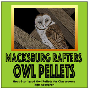 2+ inches Large Barn Owl Pellets Pack of 15